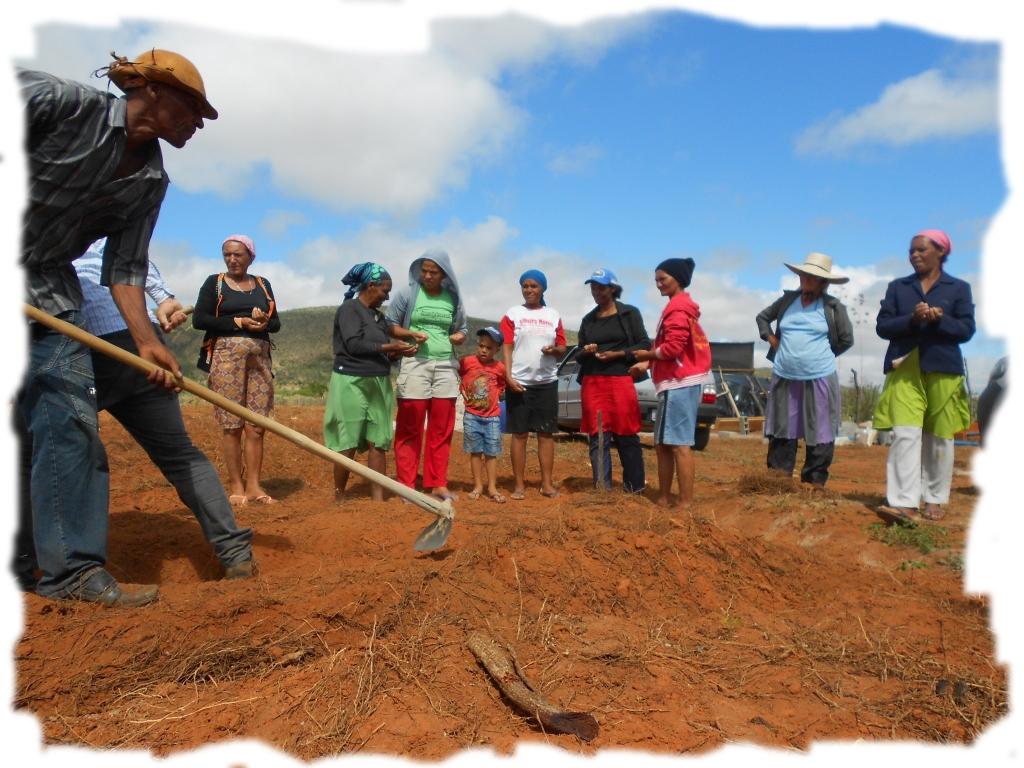 Projeto na Bahia Instituto Meio